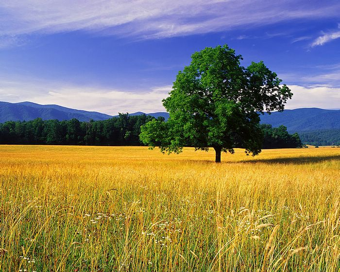 Nature Landscapes Wallpapers Landscape photo Wallpapers