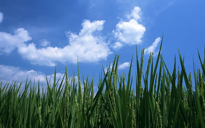 high quality nature wallpapers. farm land wallpapers,