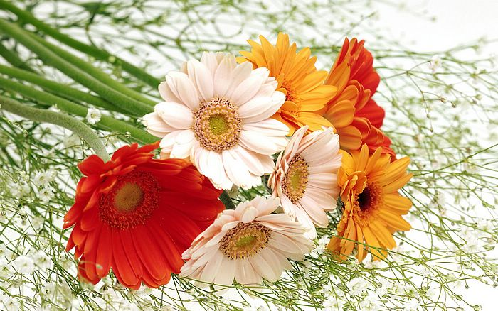 Harmony Ikebana flowers wallpaper 1440x900 - Beautiful bouquet & Flowers