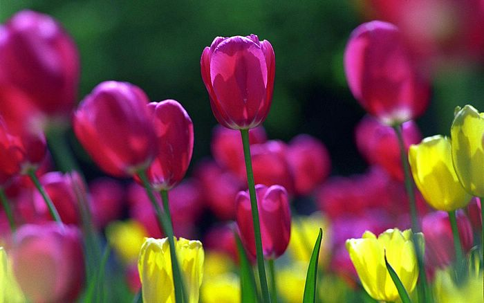 Close-up of Flowers - Widescreen Flower wallpapers - 1440x900 Close-up of Flowers photos2