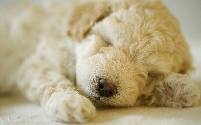 cute puppies wallpapers. Puppy wallpapers 1440x900,