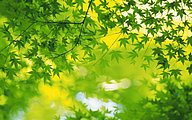 2560x1600 Glory Green leaves Wallpapers43 pics