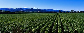 ... Panoramic Landscape Wallpapers - 2560x1024 Dual screen Wallpapers4 - Panoramic photos of Country Field - 2560x1024