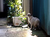 Snapshot of cats on street(Vol.3) 55 pics
