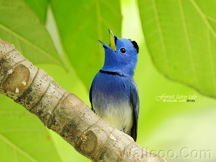 ��� ������ 2011 � ��� ������ ���� 2011  ������ ���� � ��� ������ ����� � ��� 2011 Gorgeous_birds_Blue%
