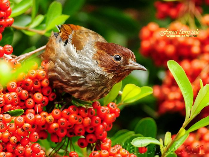 Beautiful Birds HD Wallpapers - http://whatstrendingonline.com ...