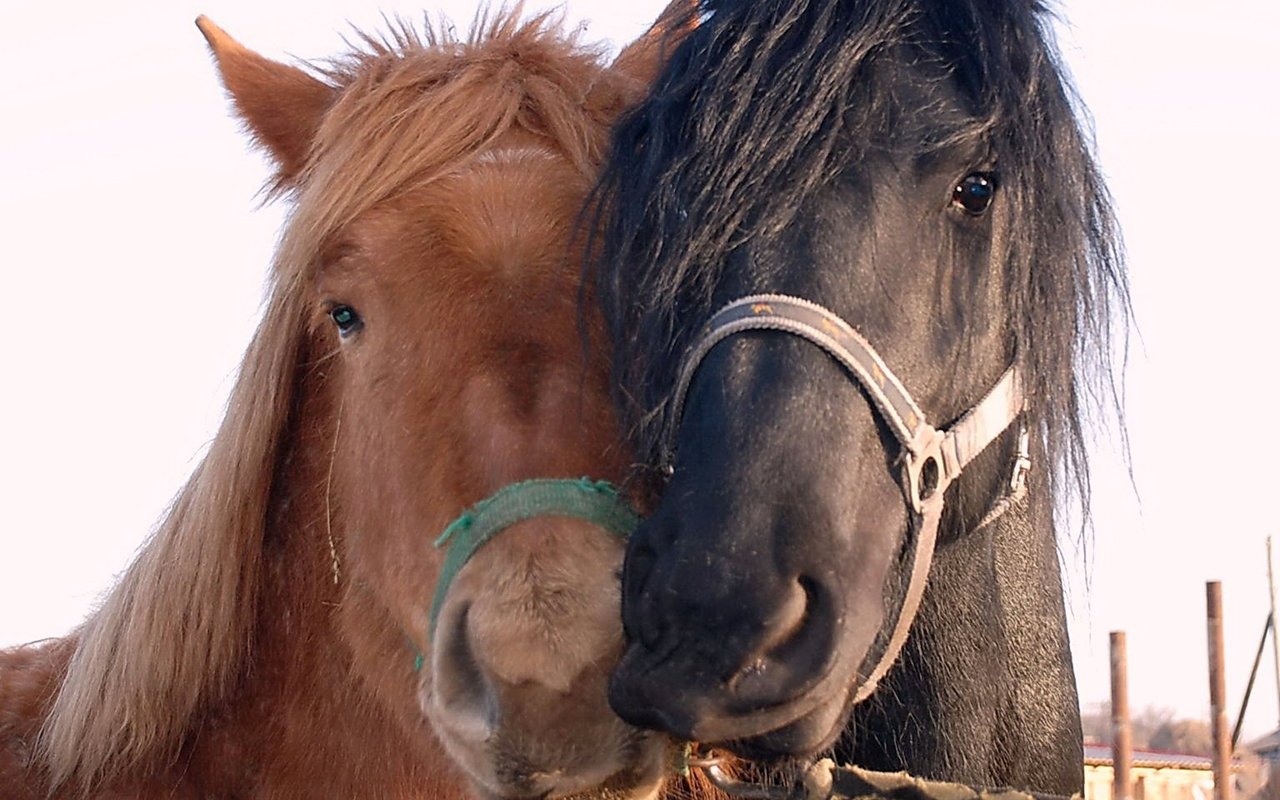 horse wallpaper awesome pair - photo #13