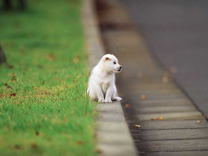 White puppys outdoor fun photo 13 wallcoo playful puppys outdoor fun white puppys outdoor fun wallpaper13 voltagebd Images