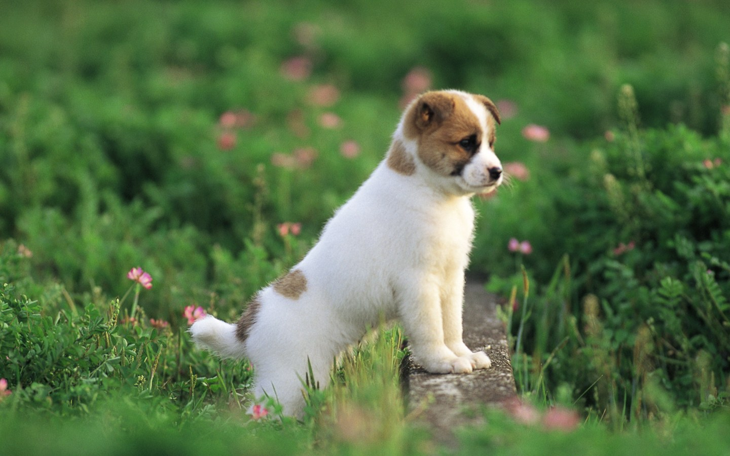 Cute puppy in a park puppy dog on grass Lovely puppies outdoor