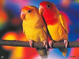 Colorful Parrots Wallpapers8 pics
