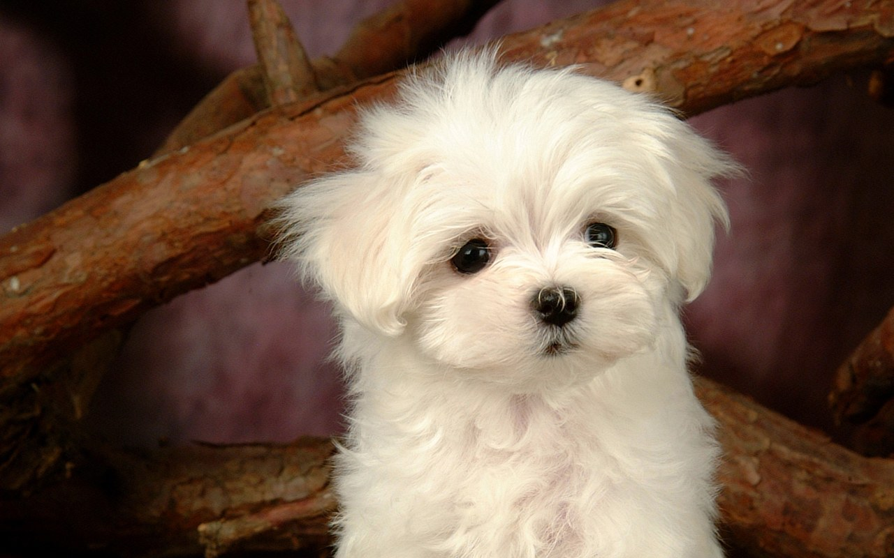 Best White Dog Names for your new white puppy