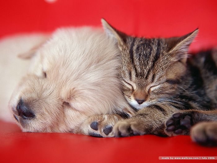 Cute Baby Kittens Sleeping With PuppiesFuneral Program Designs