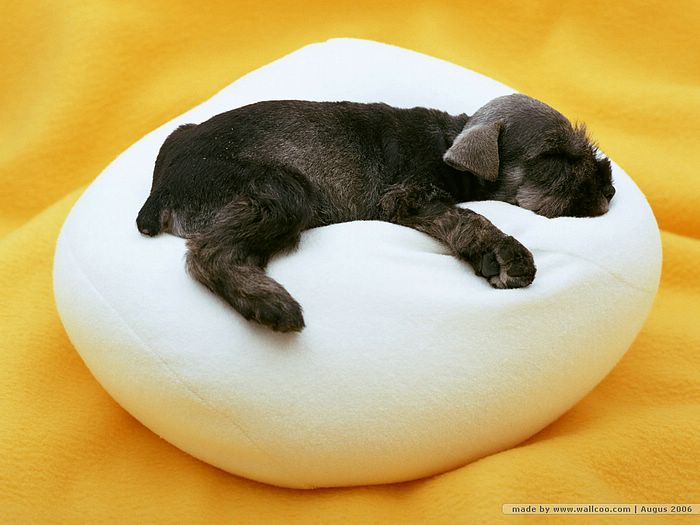 Cute Sleeping Dog Wallpaper 4 Easy Steps To House Training Success