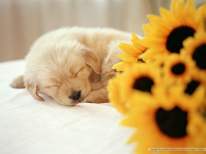 Lovely Puppy Wallpaper puppy wallpaper adorbale