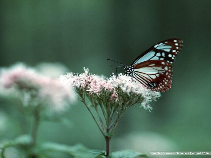 Beautiful Butterflies Photos