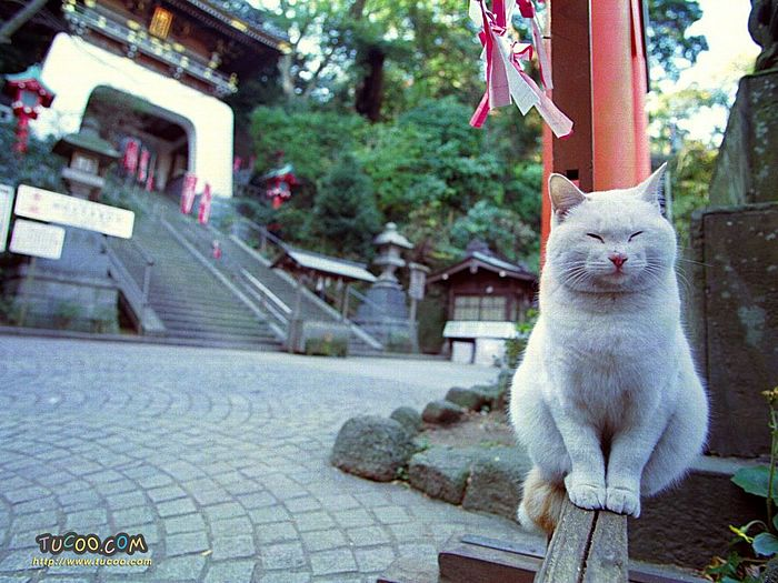Cats on the street in Japan wallpaper 21 - Wallcoo.