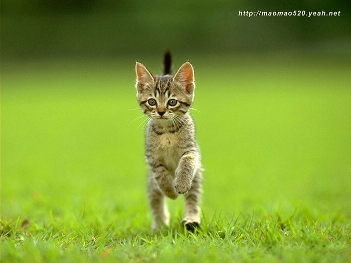 kittens wallpaper. Little Kittens Wallpaper