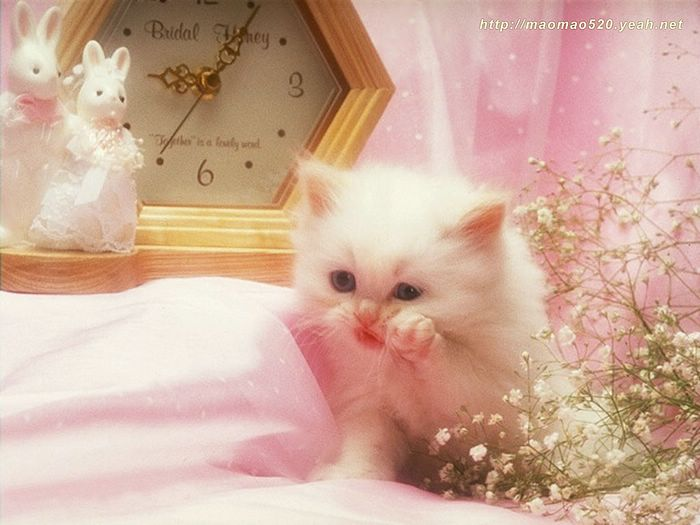 Super cute little kittens wallpaper 134 wallcoo 180pics kitten kitten playful kittens photo album super cute little kittens wallpaper thecheapjerseys Gallery
