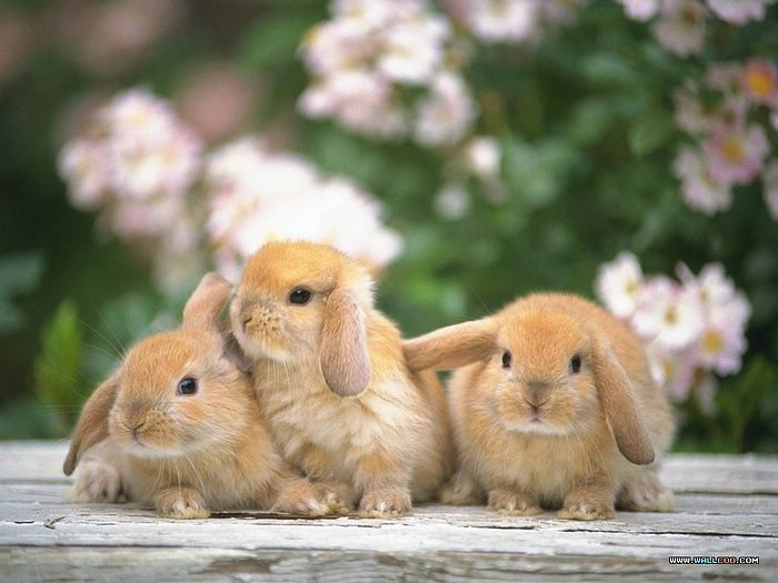 Download Free Lovely cute awesome rabbit images | Free Large Images