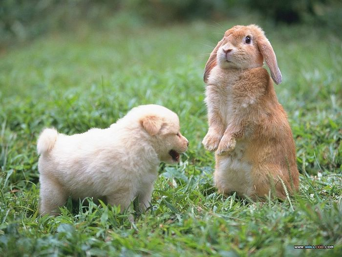 Photo Bunny And Baby Puppy