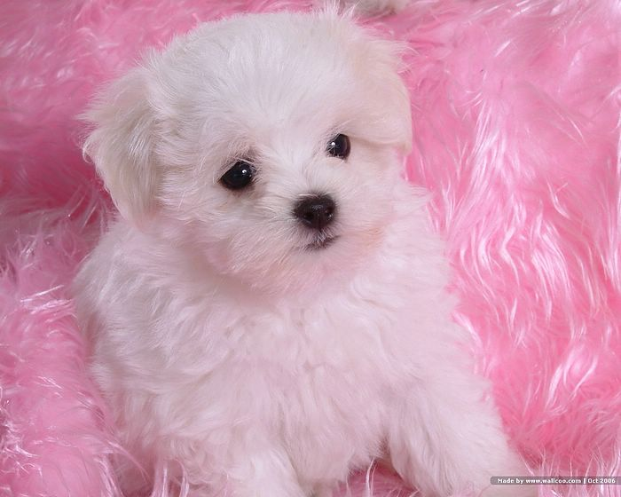 images of baby dogs - photo #31