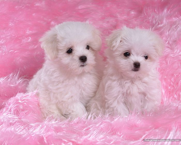 images of baby dogs - photo #12