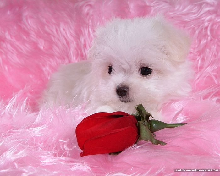 images of baby dogs - photo #14
