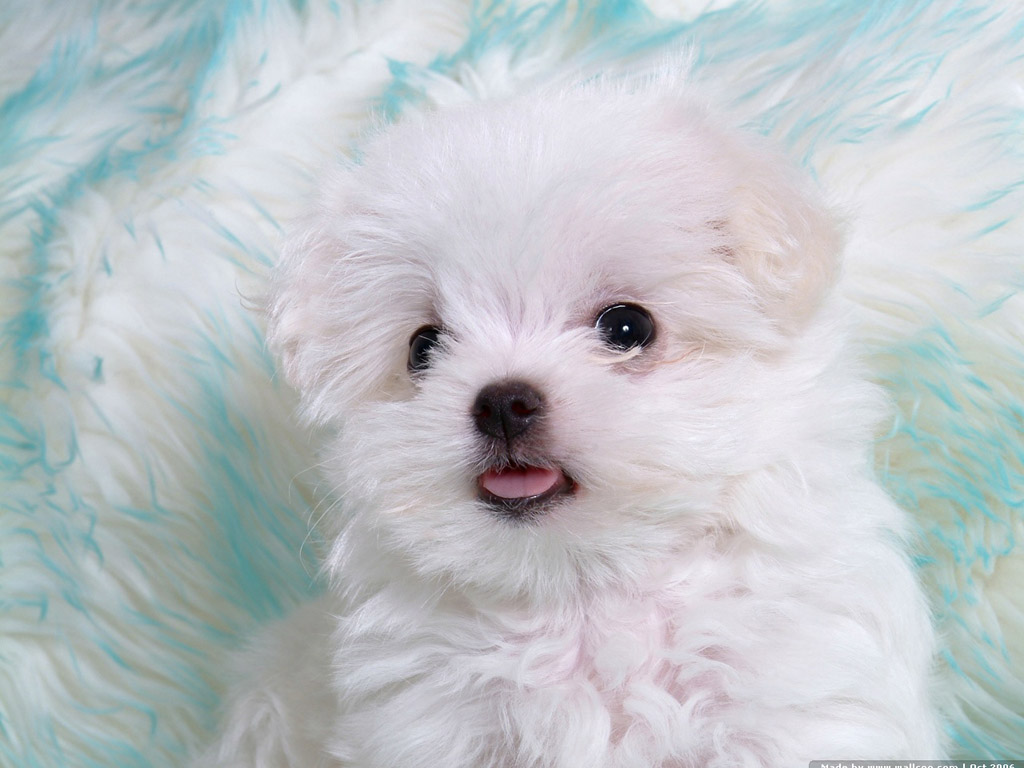 images of baby dogs - photo #30