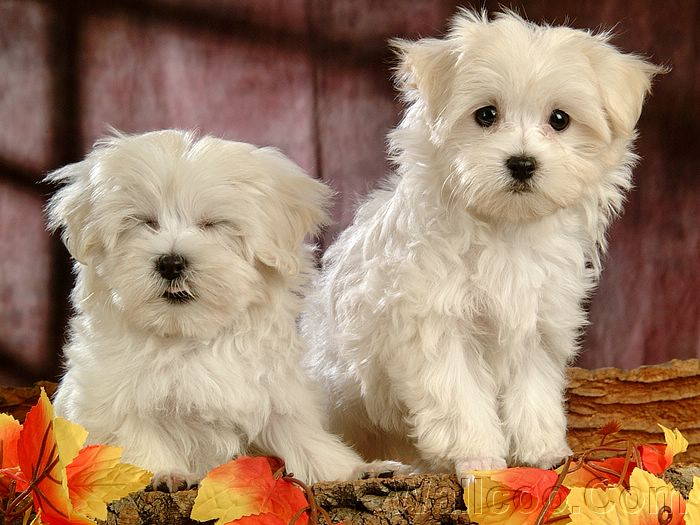 dogs pictures wallpaper. Puppies wallpaper 、Cute