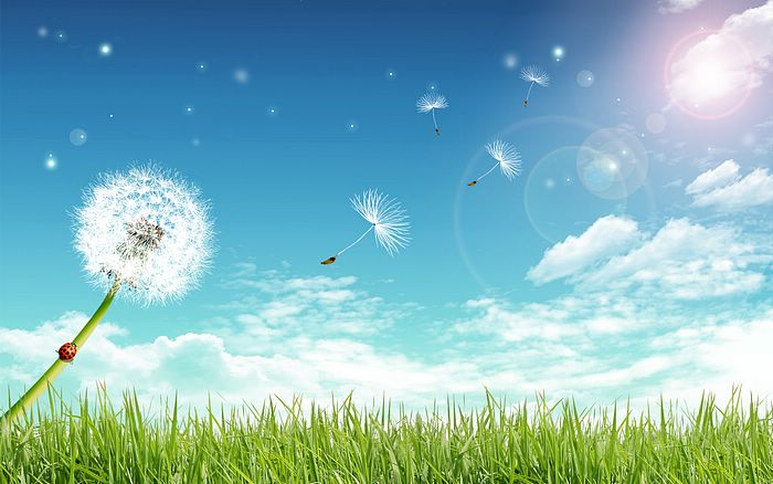 wallpaper blue sky. Dandelion Under Blue Sky,