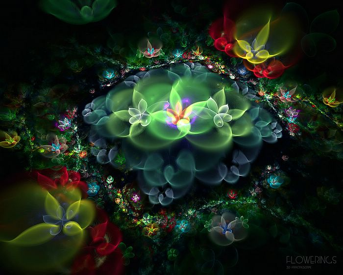 Beautiful Fractal Flowers  Abstract Floral Fractal Art Wallpapers 3