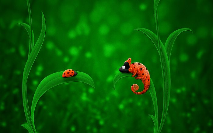 Chameleon & Ladybird - Funny Cartoon Wallpaper 1920*1200 3 - Wallcoo.