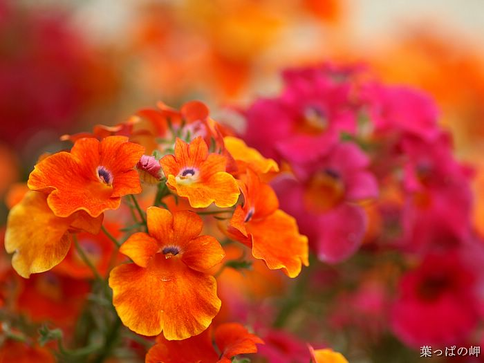 flower wallpaper hd. HD Flower Wallpaper