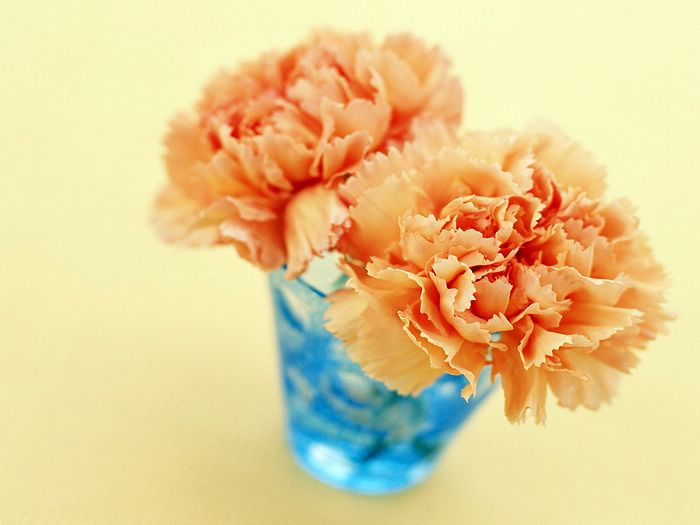 http://www.wallcoo.net/flower/Carnation_flowers_mothers_day/images/Carnation_flower_photo__14012.jpg