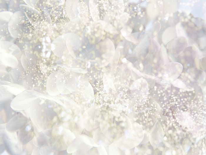 White flower in dreamy shining background 19201600 83 wallcoo seasons flowers fantasy flowers cg white flower in dreamy shining background picture 83 mightylinksfo Images