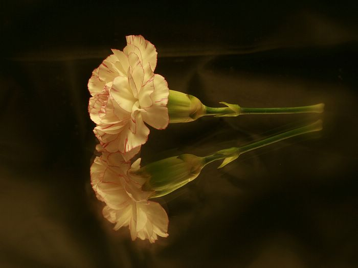 http://www.wallcoo.net/flower/carnation_flowers_mothers_day/images/