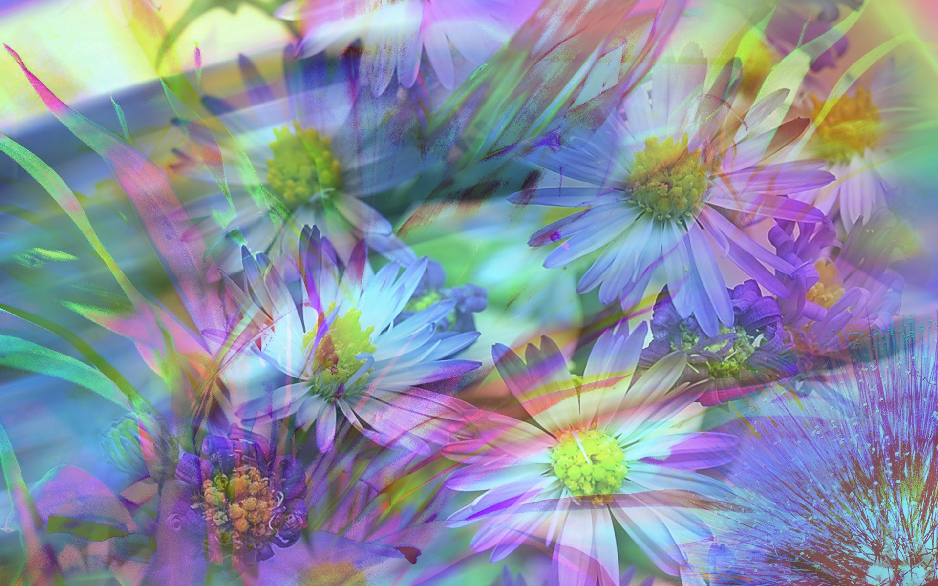 digital floral illustration flower photo manipulations
