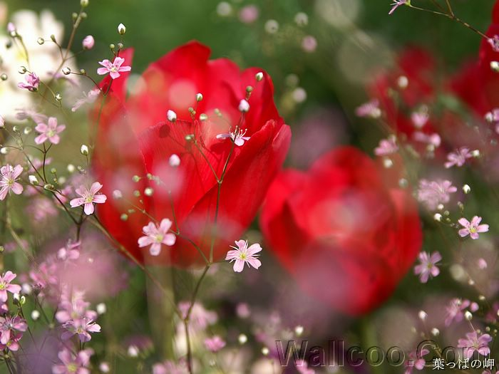 flowering season  hd flower photography vol.   wallcoo, Beautiful flower