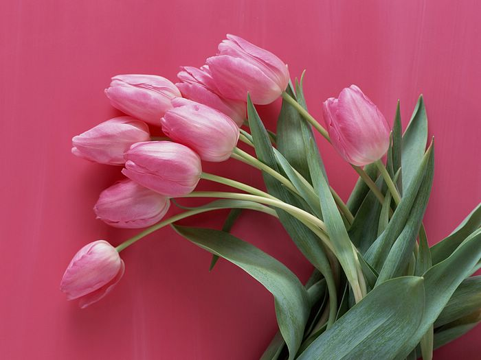 , Flower Arrangement, Flower Tulip photos, Flower Tulip pictures