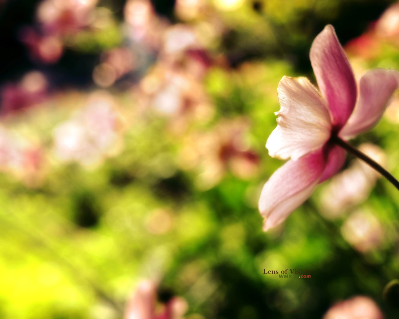Bokeh Photography - Digital Photography - Nature Photography 1280*1024 ...