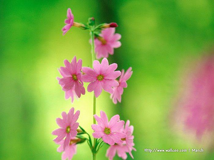 Sweet pink flowers wallpaper 1 wallcoo sweet pink flowers wallpaper 1 mightylinksfo