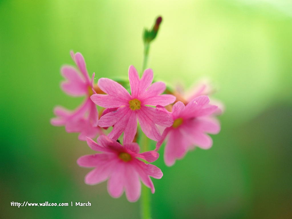 Pink flowers in warm spring beaututiful wild flowers flower pink flowers in warm spring beaututiful wild flowers flower photography 1024768 wallpaper mightylinksfo Image collections