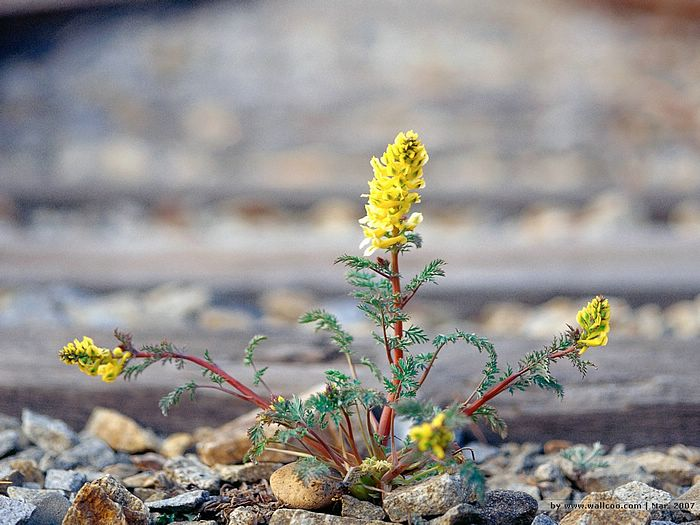 Wild Flower Growing From The Ground 13 Wallcoo Net