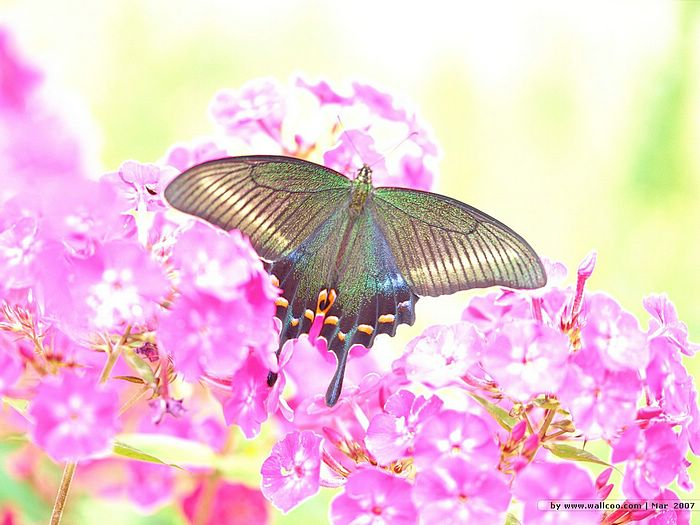 Butterfly and flowers in sunshine 7 wallcoo blooming season butterfly and flowers in sunshine picture 7 mightylinksfo