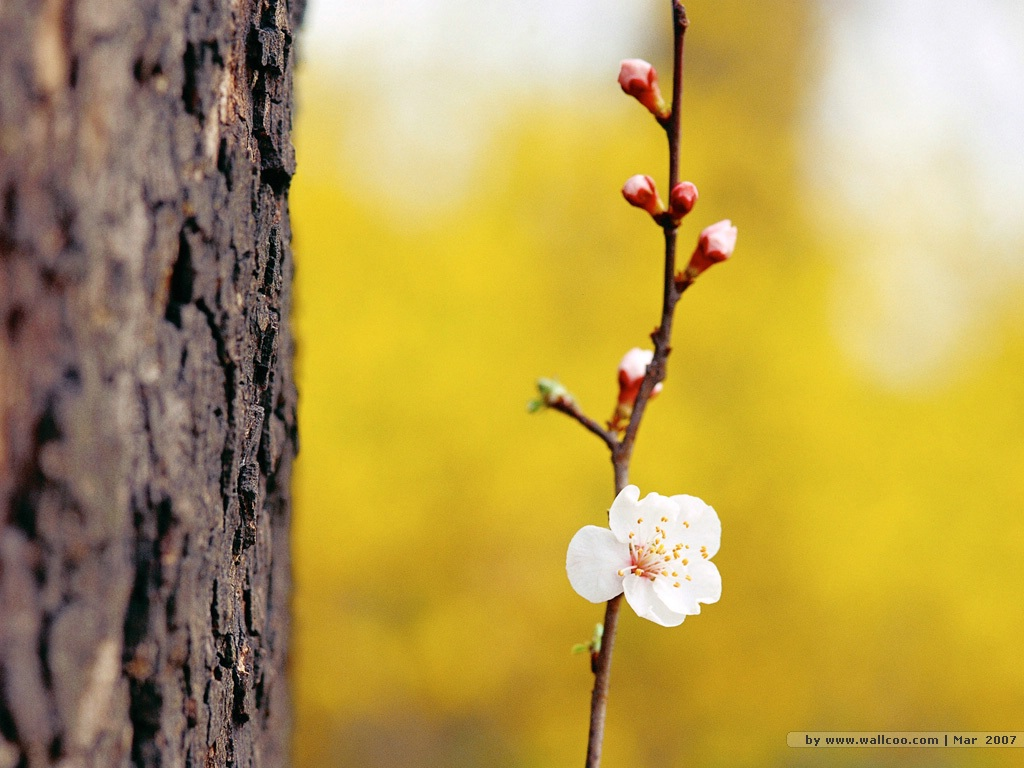 Spring Flower Photography Amazing Wallpapers