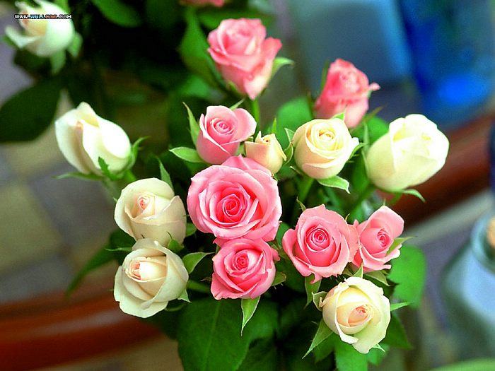 valentine's day  roses for love  wallcoo, Natural flower