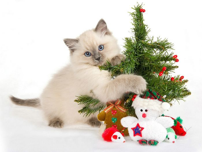 christmas decorations and objects cat with christmas decorations wallpaper 25 - Cat Christmas Decorations