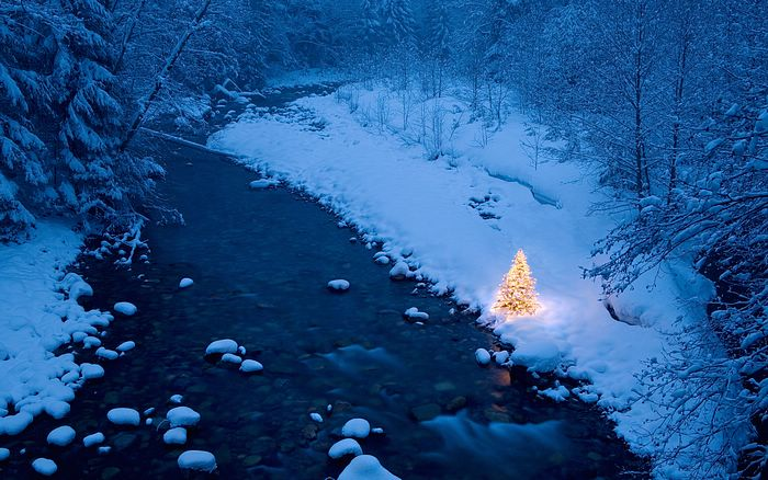 Illuminated Christmas Tree Beside A Creek In A Snow