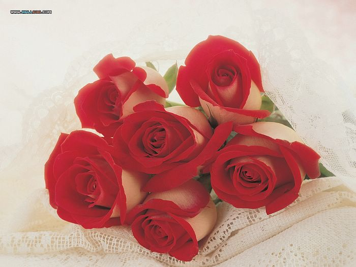 romantic red roses pictures  valentine's day rose pictures, Beautiful flower