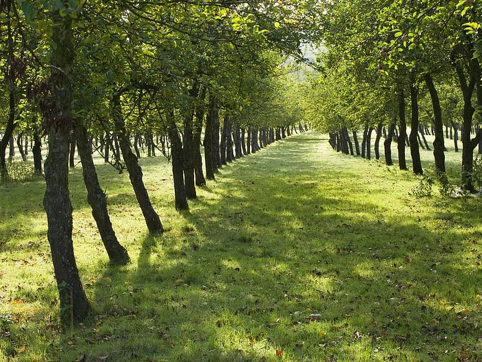 Photo of Orchard Burrow Hill Cider Farm Somerset England